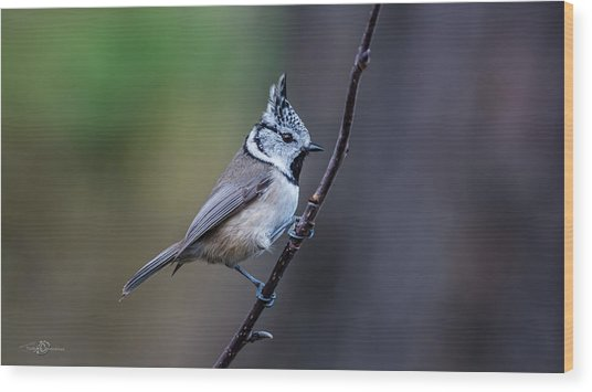 Crested Tit On A Twig Wood Print