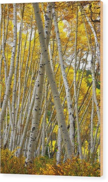 Crossed Aspens Wood Print
