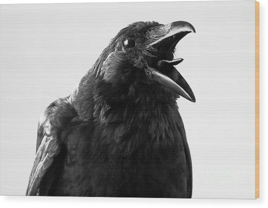 Crow In Studio Wood Print