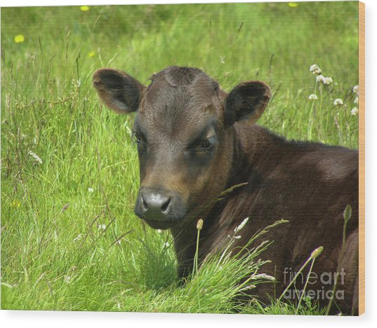 Cute Cow Wood Print
