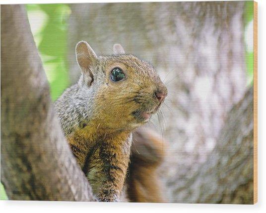 Cute Funny Head Squirrel Wood Print
