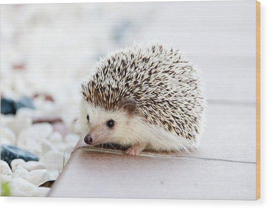 Cute Hedgeog Wood Print