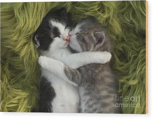 Cute Little Kittens Outdoors In Natural Wood Print