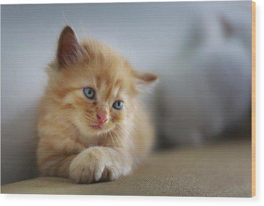 Cute Orange Kitty Wood Print