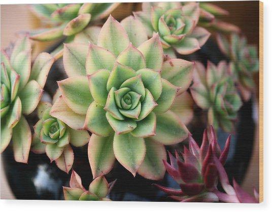Cute Succulent Wood Print