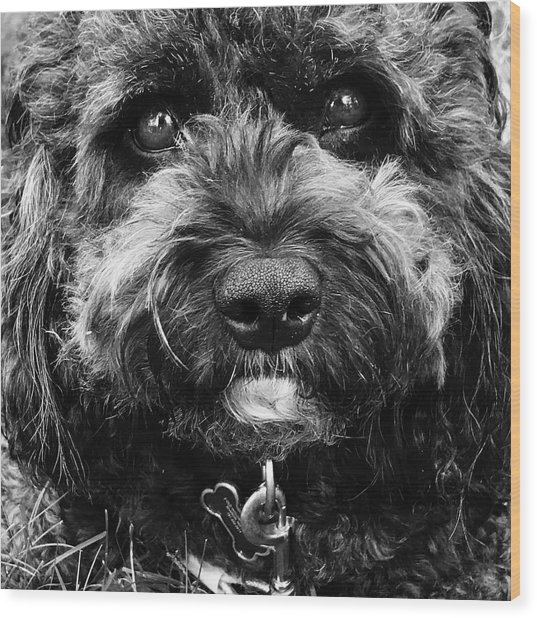 Cutest Dog On The Planet Wood Print