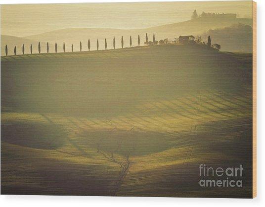 Cypress Line In Tuscan Scenery Wood Print