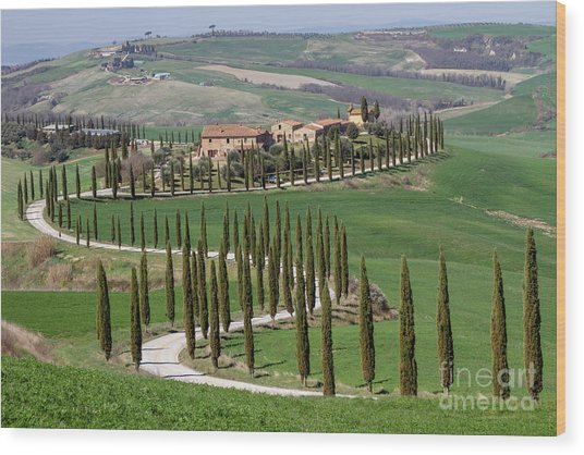 Cypress Tree Alley In Tuscany-4 Wood Print