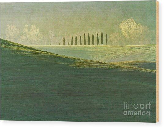 Cypress Tree Lines Wood Print