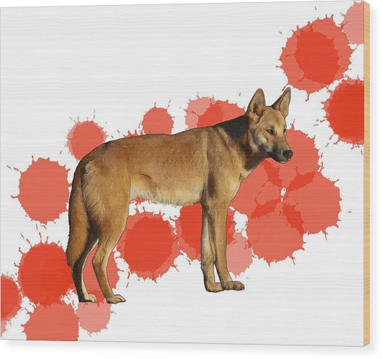 D Is For Dingo Wood Print