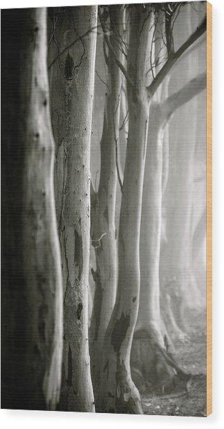 D0805 - Gumtrees Wood Print