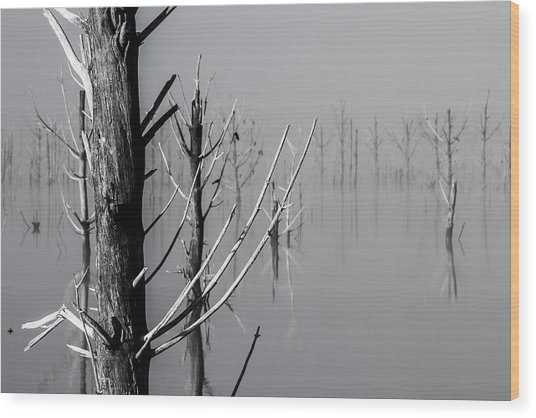 D1095 - Theewaterskloof Trees Wood Print