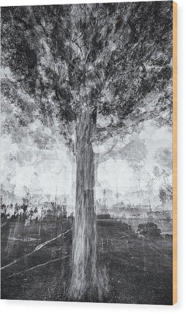 D1651p Wood Print