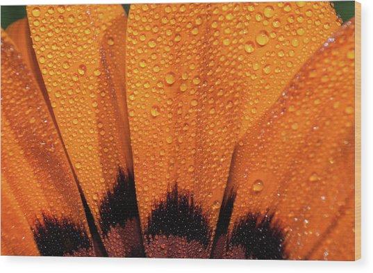 D3453 Wood Print