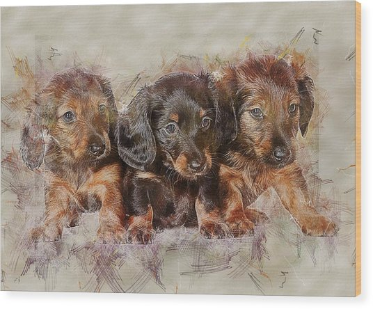 Dachshund Three Puppies Wood Print