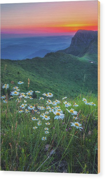 Daisies In The Mountain Wood Print