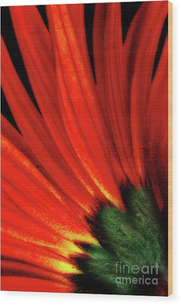 Daisy Aflame Wood Print
