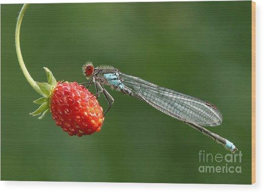 Damselfly On Strawberry Wood Print