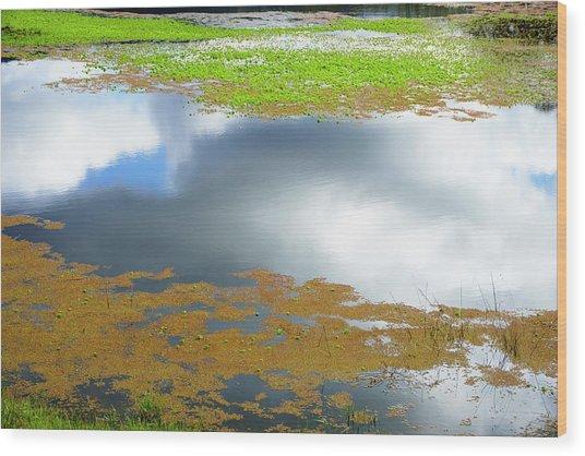 Damselfly Pond - 19 4498 Wood Print