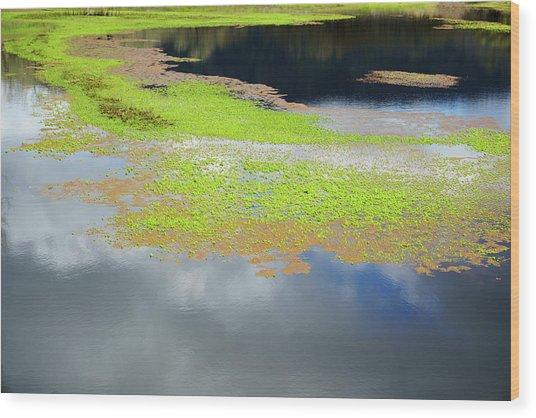 Damselfly Pond - 19 4503 Wood Print