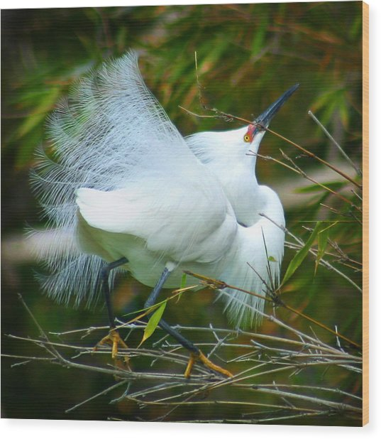 Dancing Egret Wood Print
