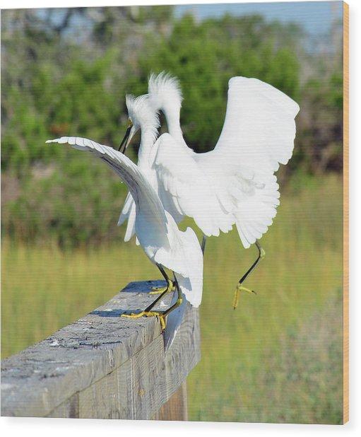Dancing Snowy Egrets Wood Print