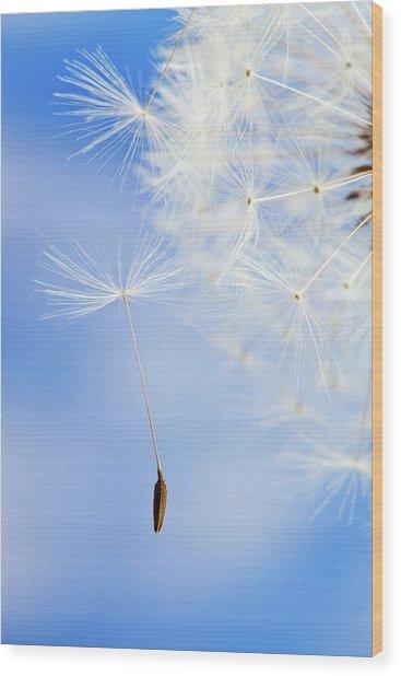 Dandelion Wood Print by Salima Senyavskaya