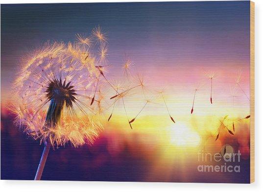 Dandelion To Sunset - Freedom To Wish Wood Print