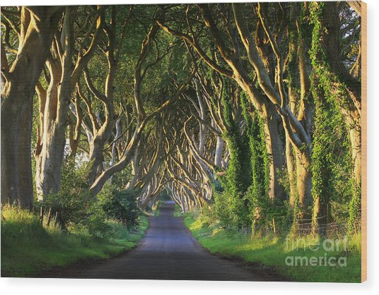 Dark Hedges Vi Wood Print