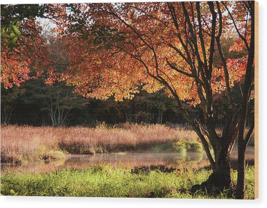 Dawn Lighting Rhode Island Fall Colors Wood Print