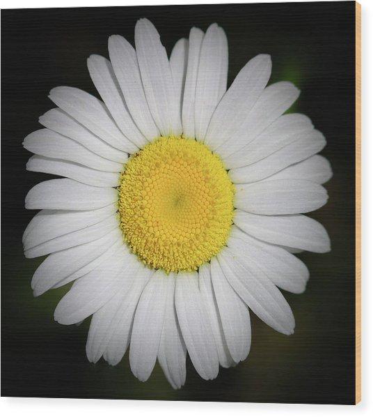 Day's Eye Daisy Wood Print