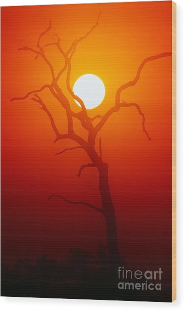 Dead Tree Silhouette With Dusty Sunset Wood Print by Johan Swanepoel