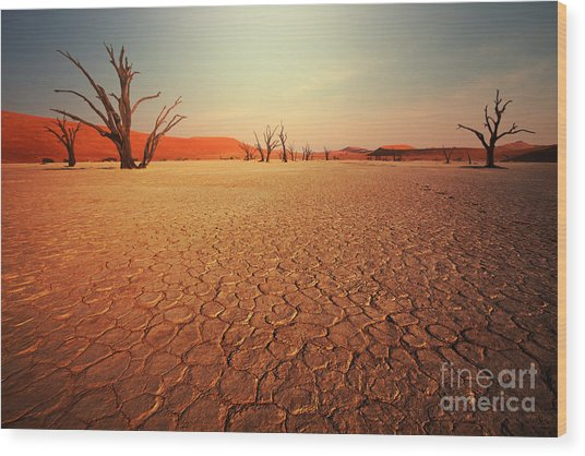 Dead Valley In Namibia Wood Print