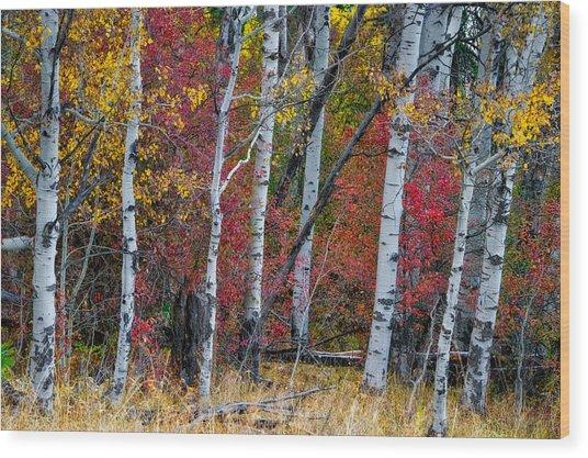 Deep Aspens Wood Print