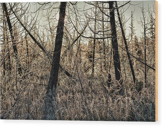 Deep Frost Wood Print