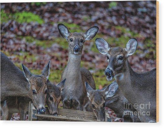Deer Gathering Wood Print