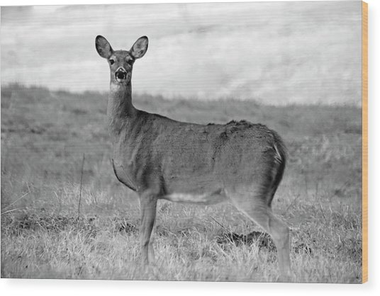 Wood Print featuring the photograph Deer In Black And White by Angela Murdock