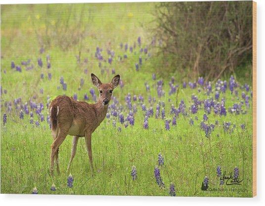 Deer In The Bluebonnets Wood Print
