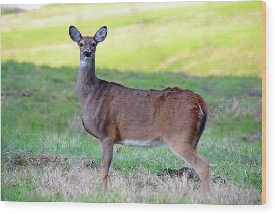 Wood Print featuring the photograph Deer Standing In A Field by Angela Murdock