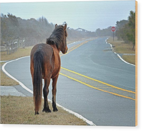 Wood Print featuring the photograph Delegate's Pride Awaiting Tourists On Assateague Island by Bill Swartwout Fine Art Photography