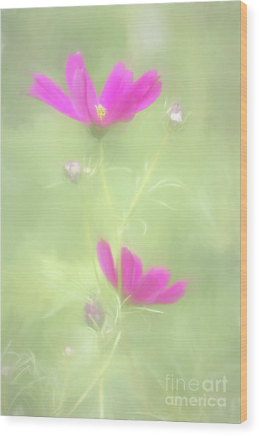 Delicate Painted Cosmos Wood Print