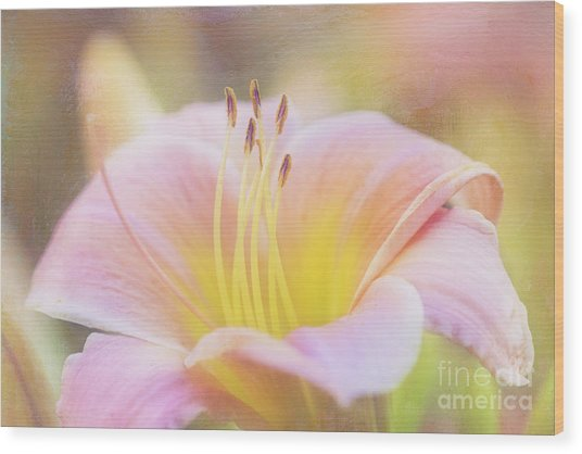 Delicate Pink Daylily Wood Print