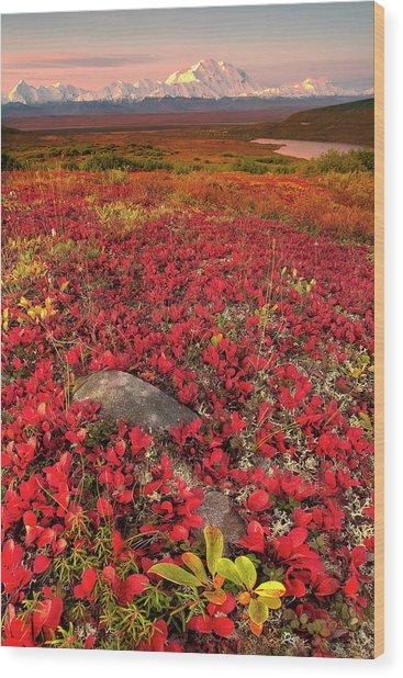 Denali National Park Fall Colors Wood Print
