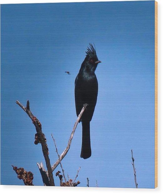 Desert Phainopepla And Dragonfly Wood Print