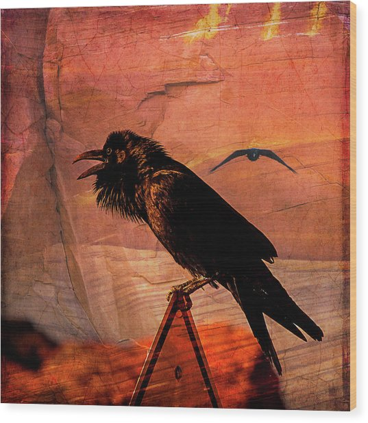 Desert Raven Wood Print