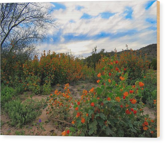 Desert Wildflowers In The Valley Wood Print