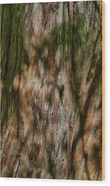 Detail Of Bark On Huge  Tree Wood Print