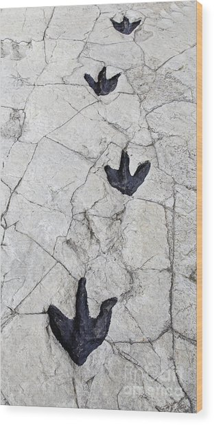 Detail Of Dinosaur Tracks In Spain Wood Print