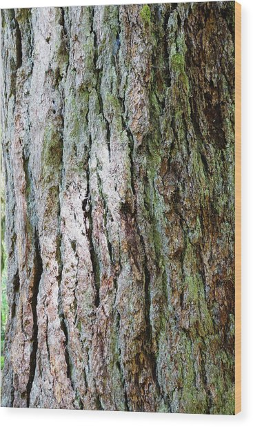 Details, Old Growth Western Redcedars Wood Print