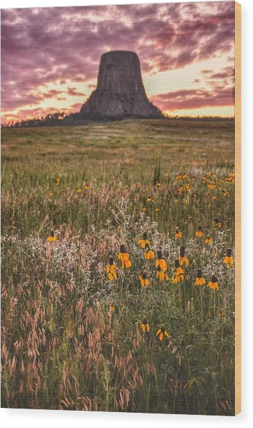 Devil's Tower And Sunflowers Wood Print